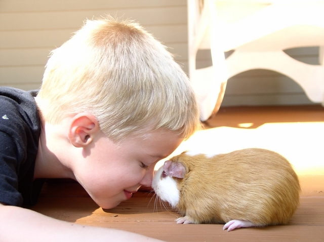 Boy With His Guinea Pig