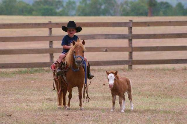 Boy Riding Pony With Calf