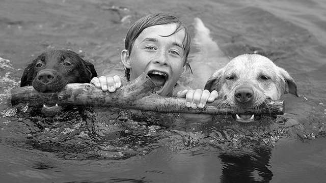 Boy Swimming With Retrievers