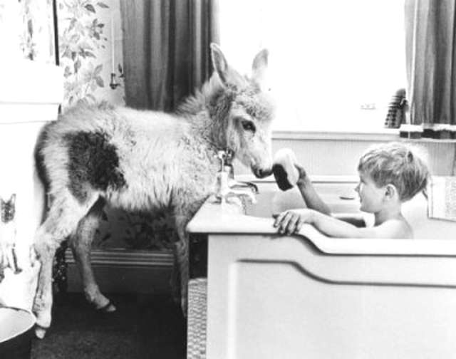 Boy Taking Bath With Pet