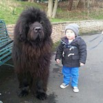 Boy Standing Next To Newfoundland Dog