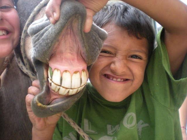 Boy Showing Horse's Teeth