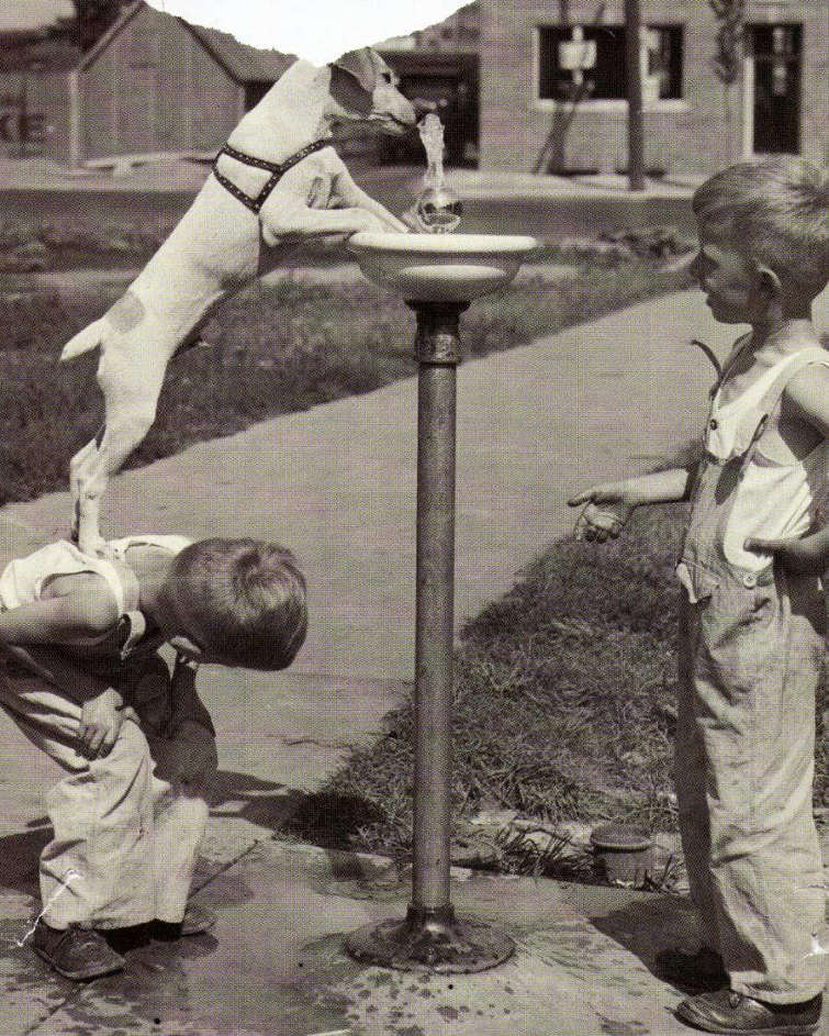 Boys Help Dog Get Drink From Fountain