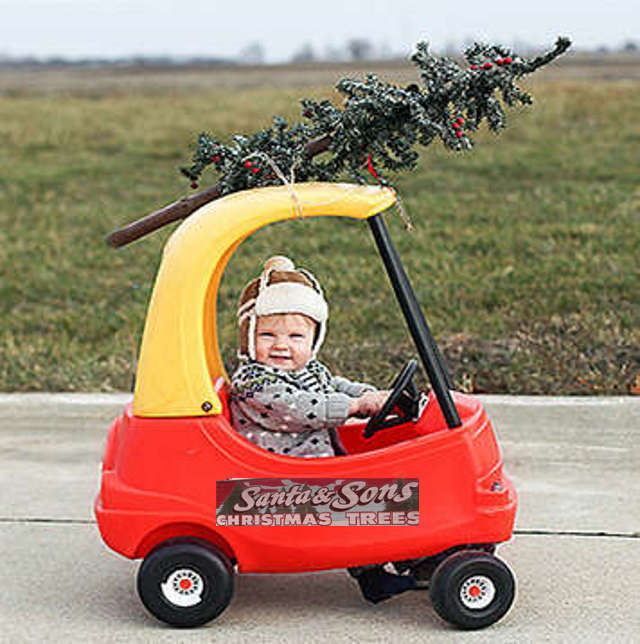 Boy Delivering Christmas Tree In Toy Car