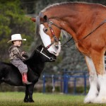 Young Boy On Pony With Clydesdale