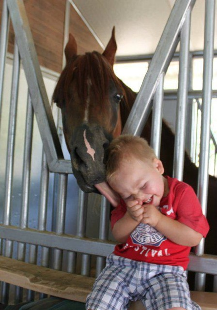 Horse Licking Young Boy