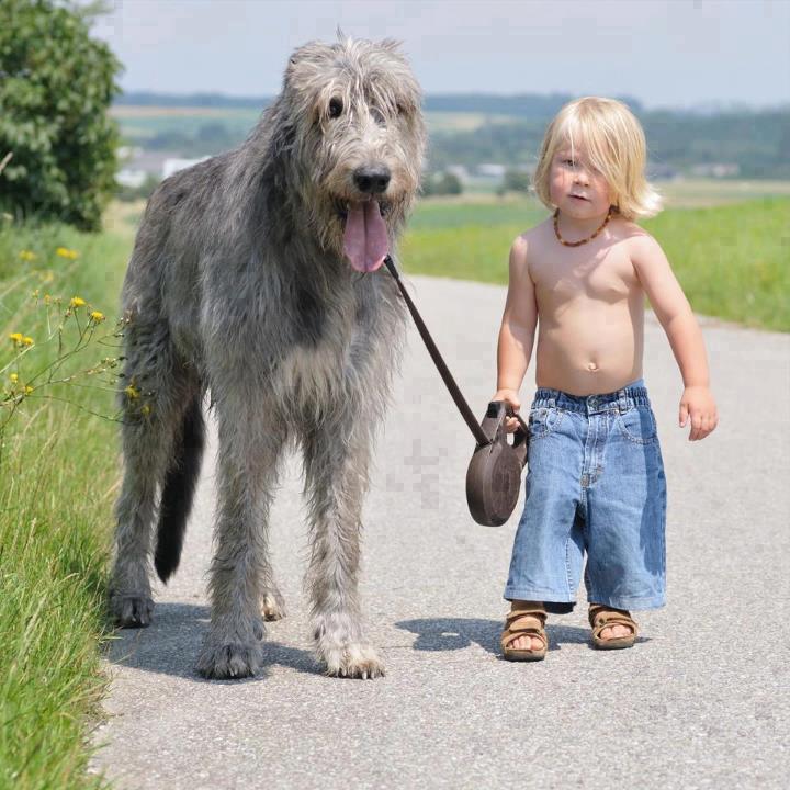 shirtless boy and dog
