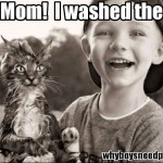 Boy washes cat