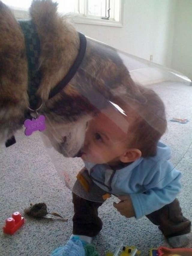 Boy Kissing Dog Wearing Cone of Shame