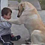 Dog tries to befriend boy with down syndrome