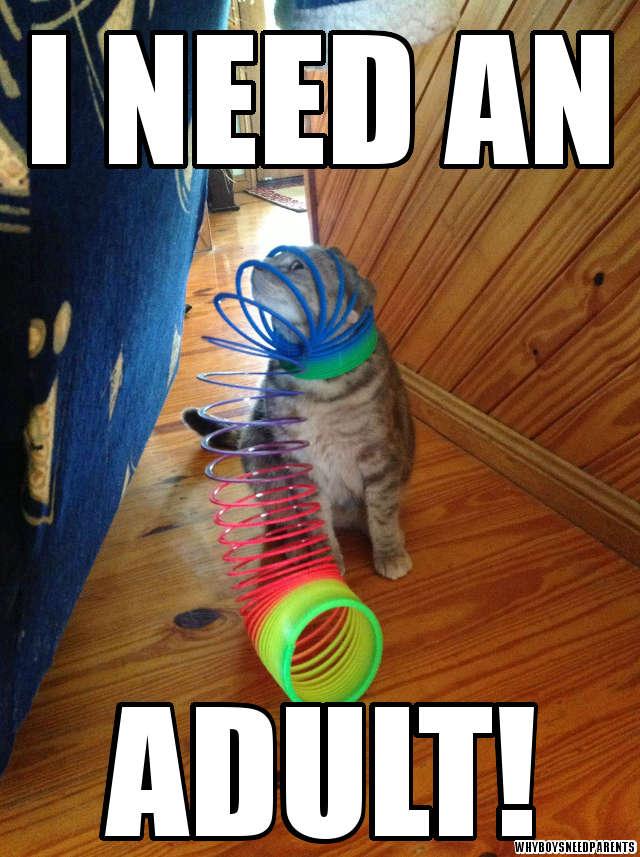 I need an adult