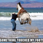 Horse Something touched my foot